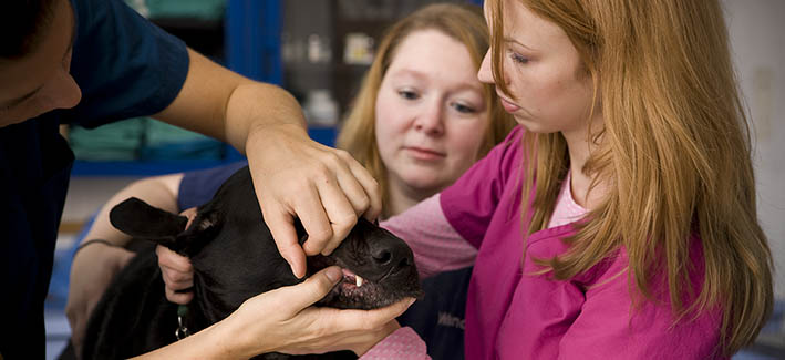 Students examining a dog in the vet tech program