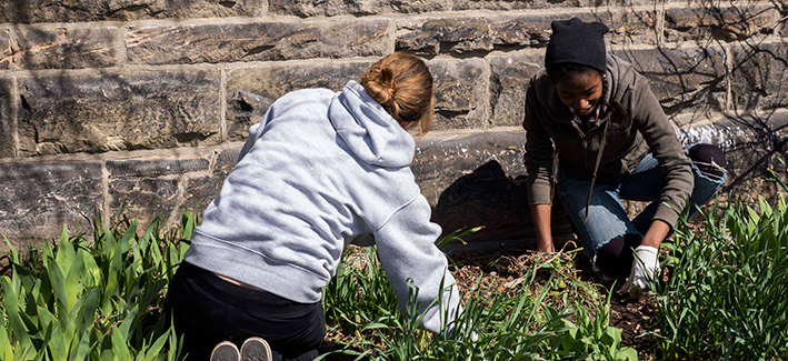 Students weeding a garden