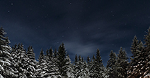 Winter night sky with snow capped trees